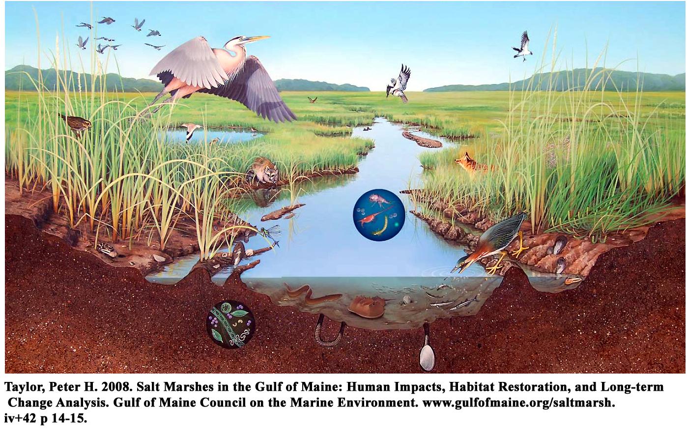 Creatures of the Salt Marsh.